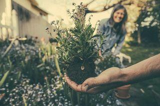 Planting-865294_640[1]