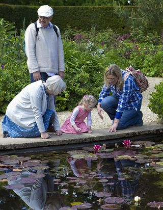 Multi Generation Lilly Pond