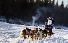 Dogs-671165__180[1]
