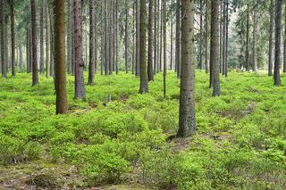 Forest-348995_640[1]